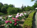 東松山ぼたん園
