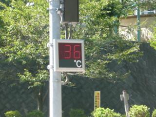 299号36℃