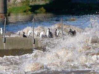 台風後利根川